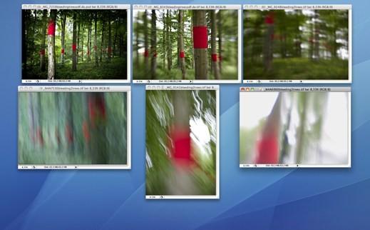 """""""bleeding trees"""" Fotomappe - Motive"""