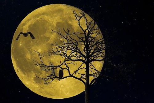 Eulen jagen nachts