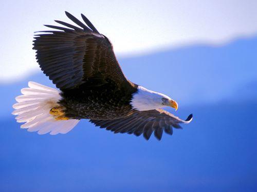 Bist du hart wie Stahl oder sanft wie der Flug eines Adlers?