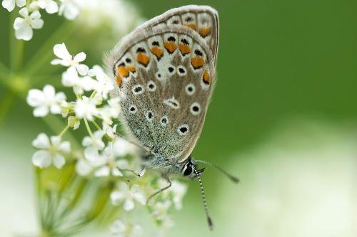 Bist du eine Schmetterlingsseele?