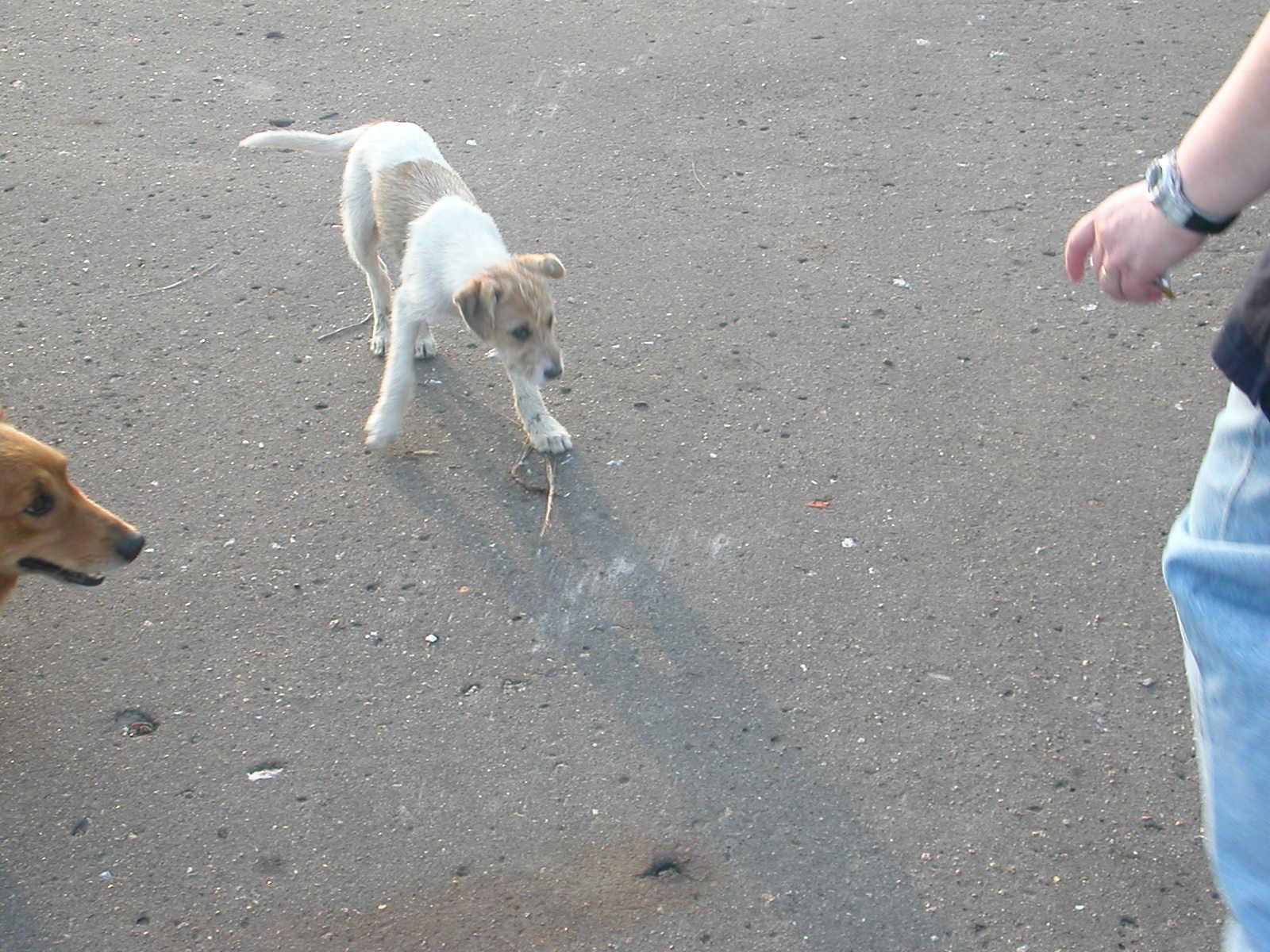 Streunende Hunde in der Flussnähe, hungrig und voll Flöhe
