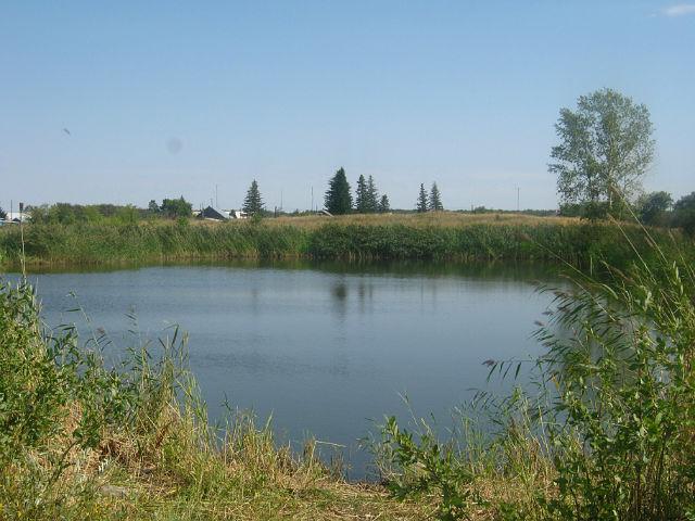 Der Baggersee in Dobroje Pole /Schönfeld - ziemlich zugewachsen. Zu meiner Zeit gab es mehrere Badestellen.