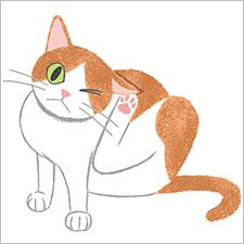 『ねこのきもち』イラスト 猫 cat