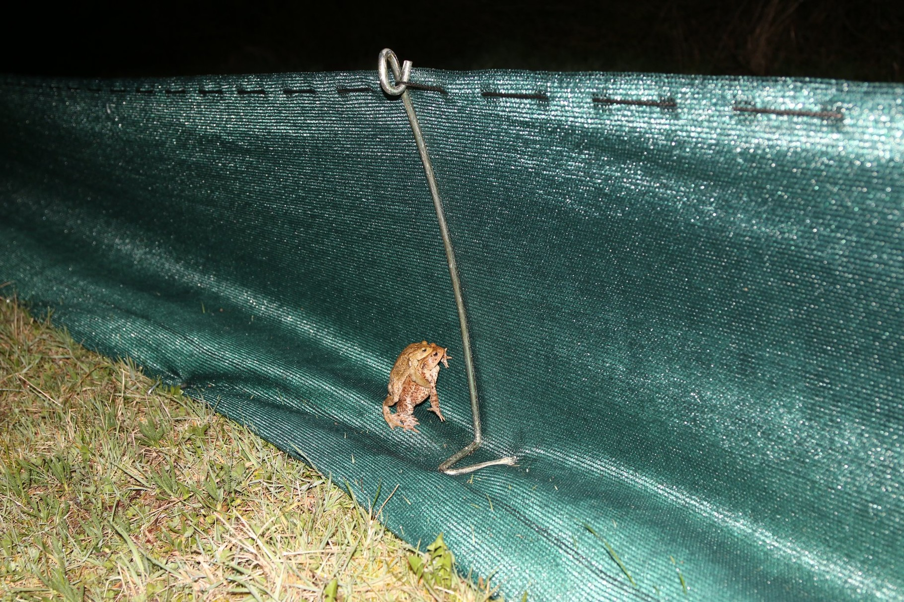 Kein Weiterkommen am Amphibienzaun