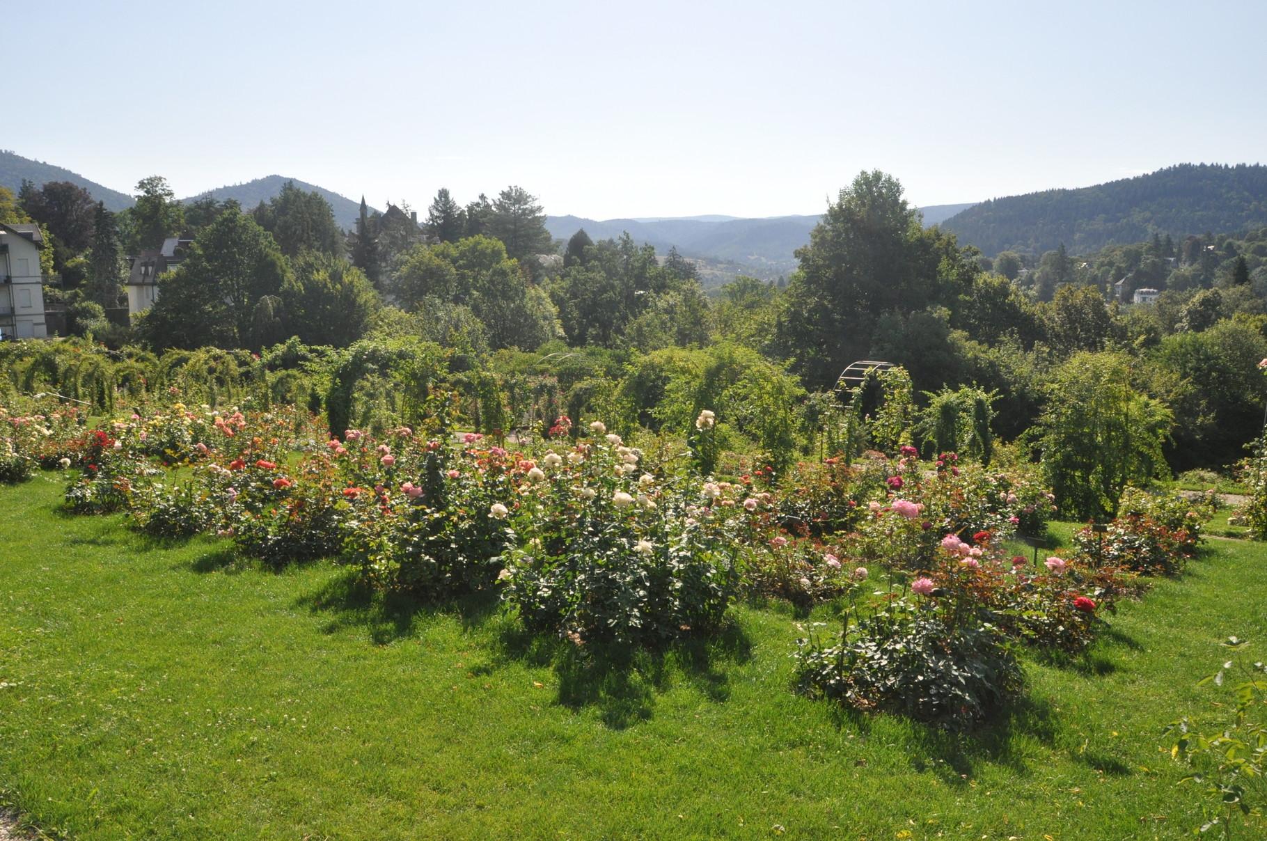 Rosenneuheitengarten in Baden-Baden