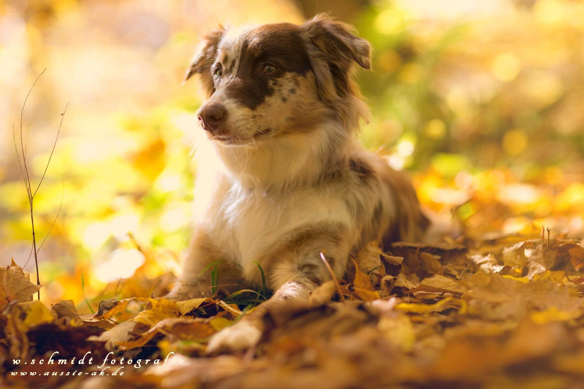 Ivy mit knapp 11 Monaten - Oktober 2016