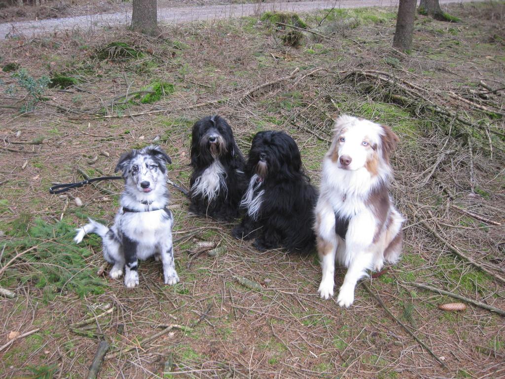 ich mit meinen Kumpels - Inkaya, Sue Le und Graffi