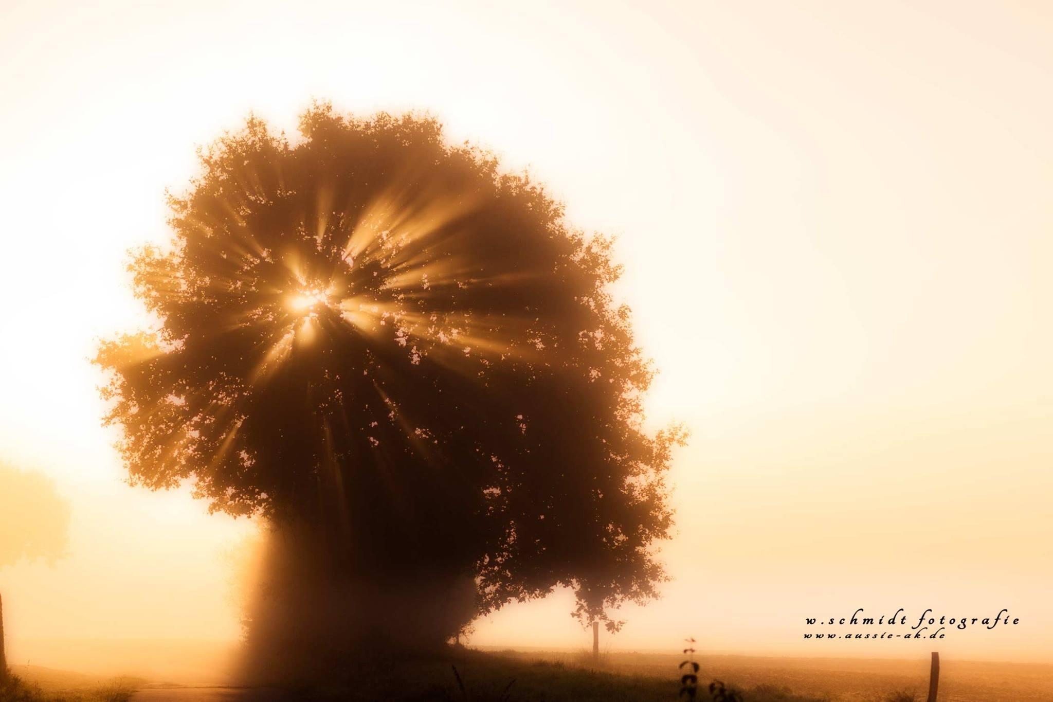 Sonnenaufgang Rehhardt