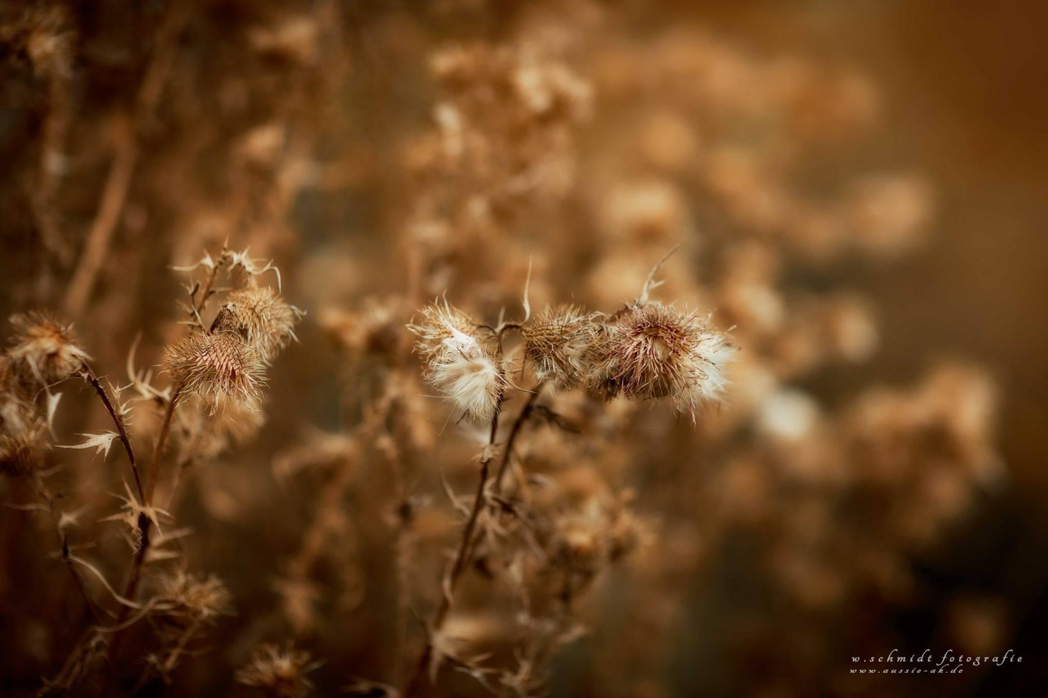Herbsteindrücke 10.2016