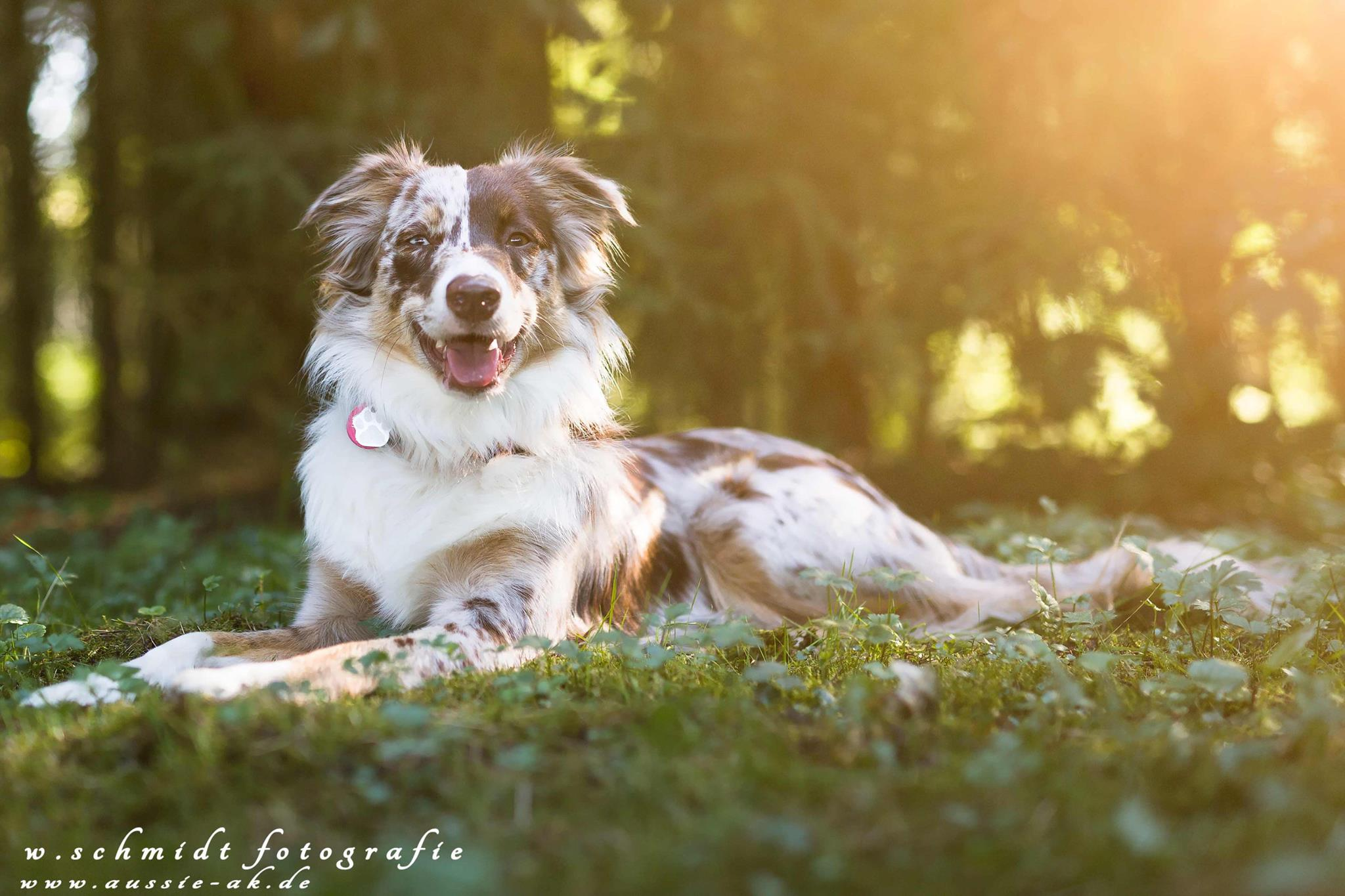 Ivy - mit 9 Monaten