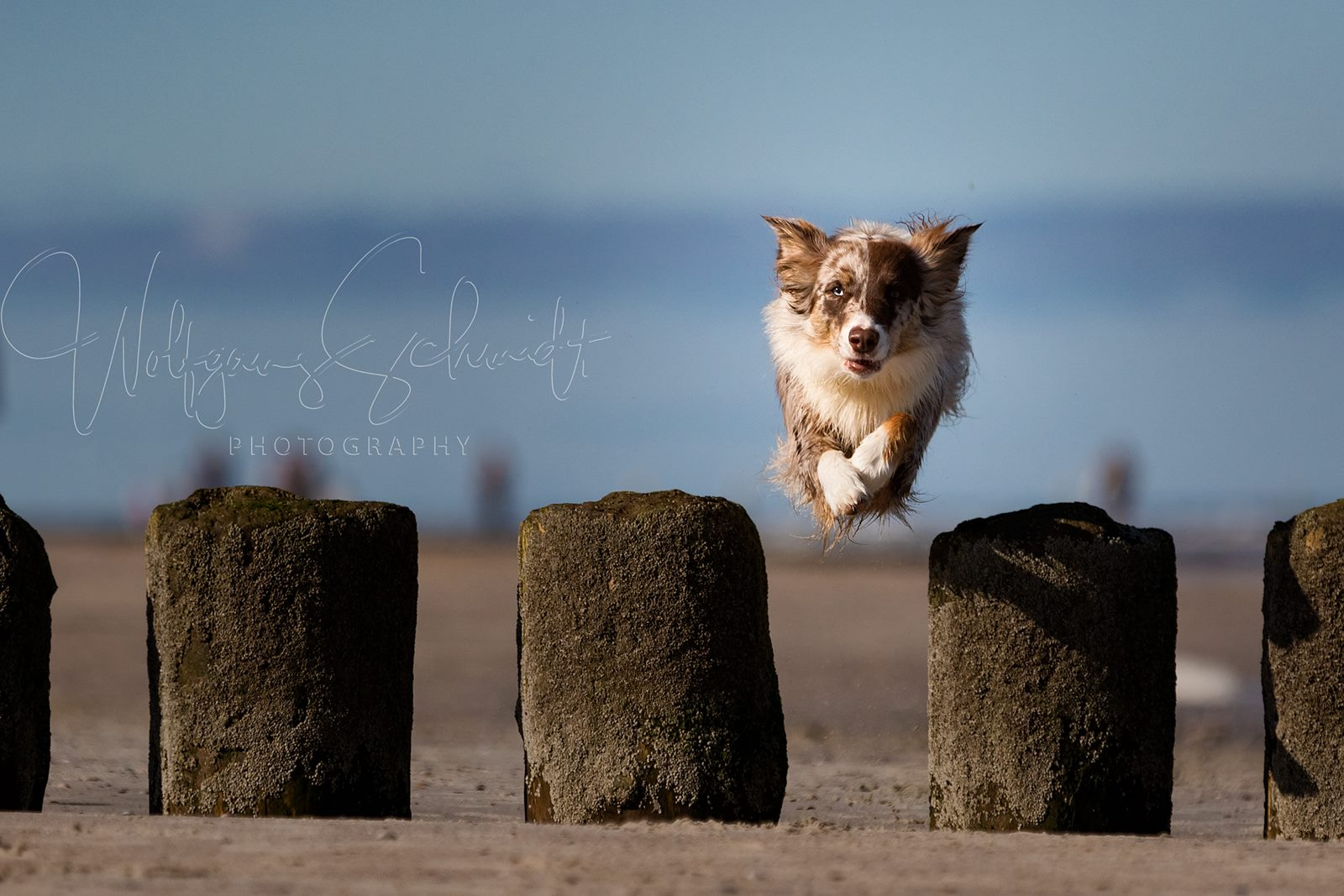 Ivy - Jumping Beach Norderney