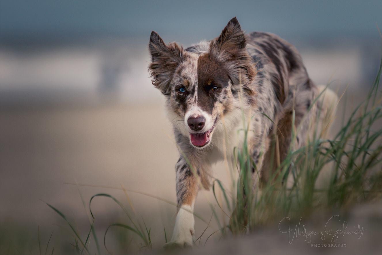 Ivy - als Strandläufer