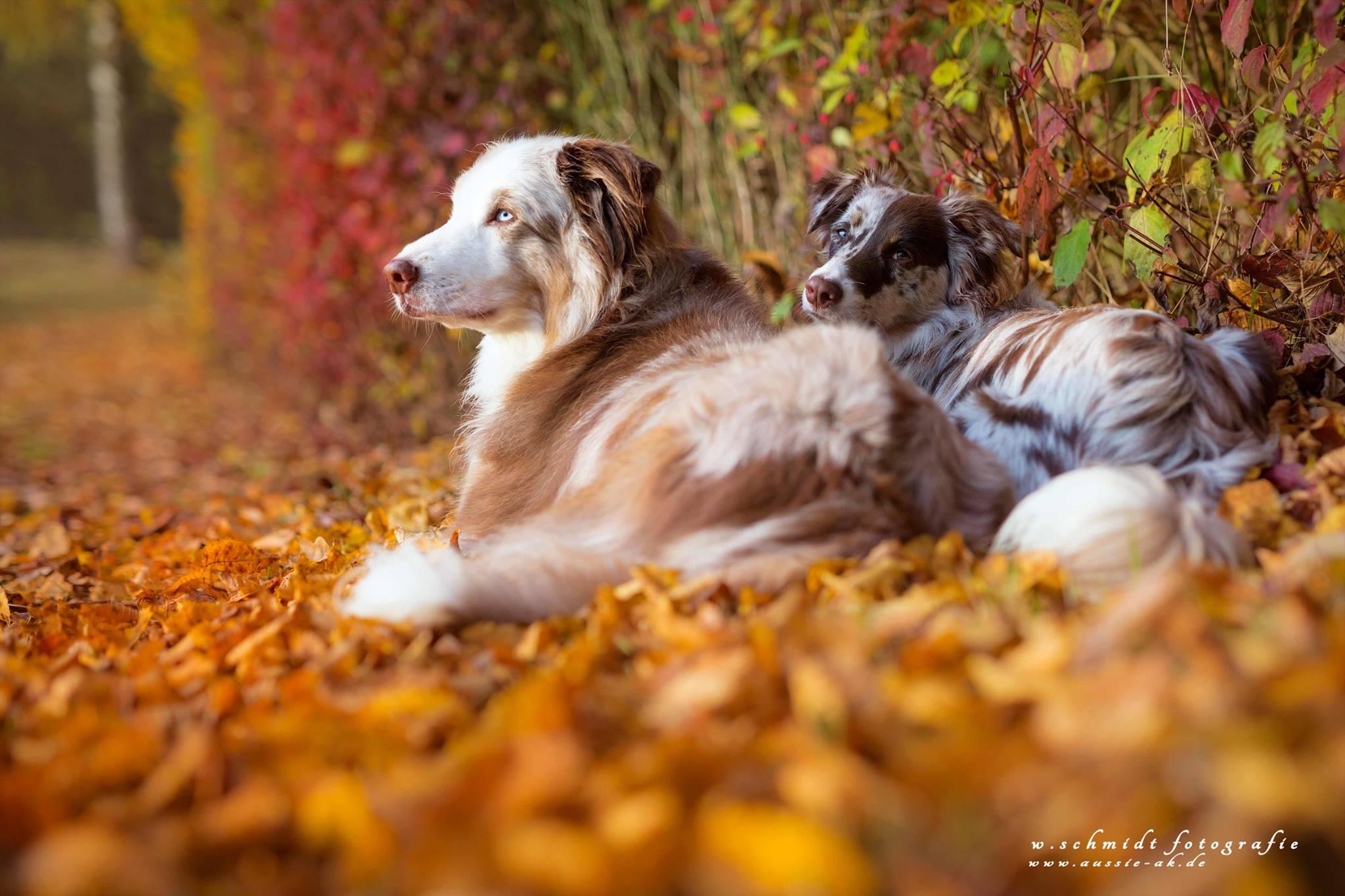 Graffi und Ivy in der Herbstsonne