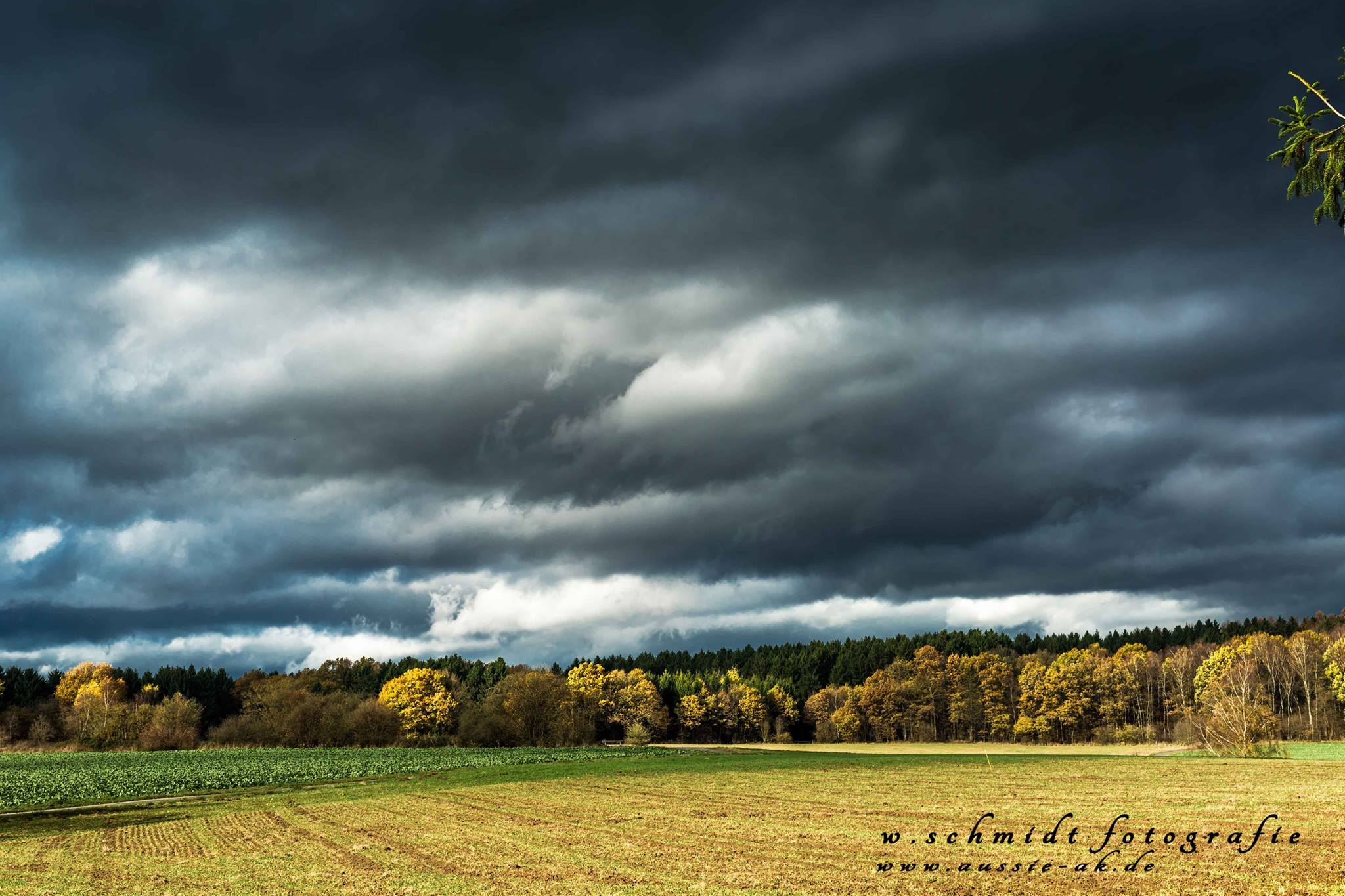 Rehhardt im Sturm