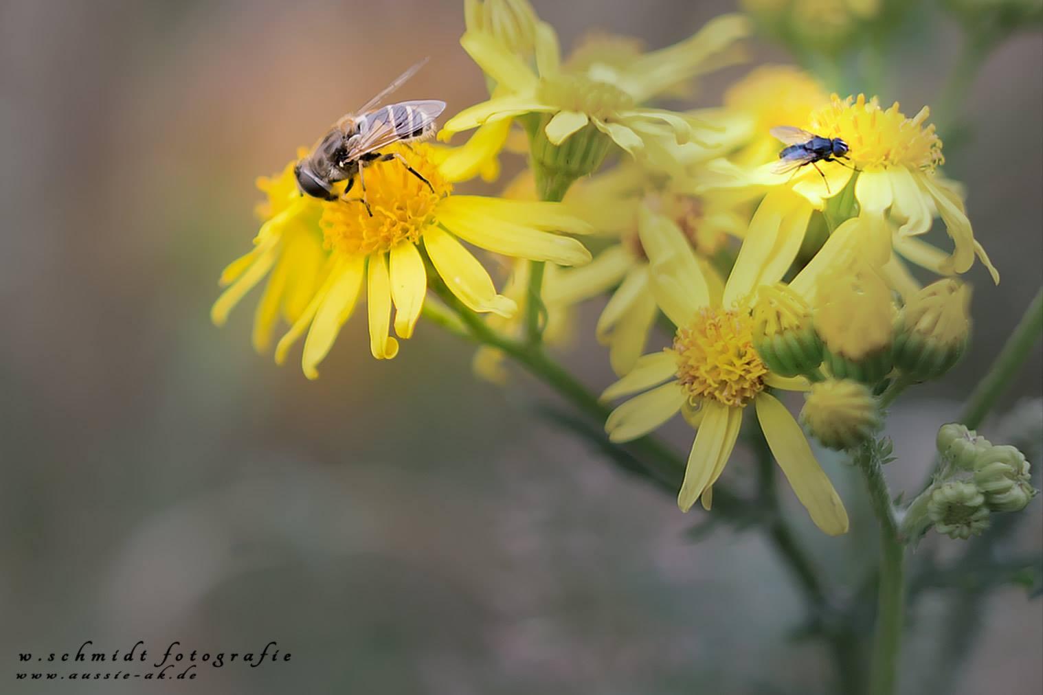 giftige Blüte