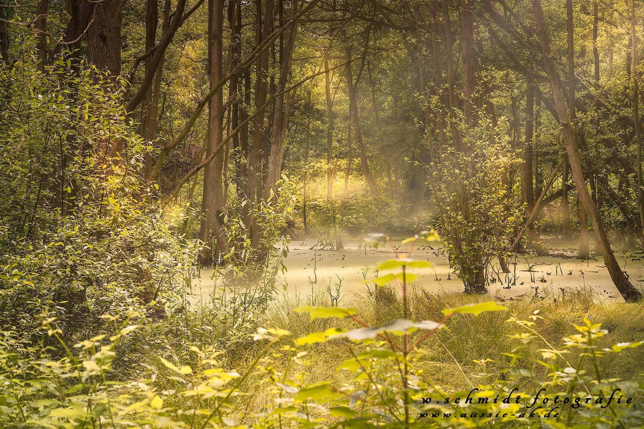 Moorlandschaft in der Birk