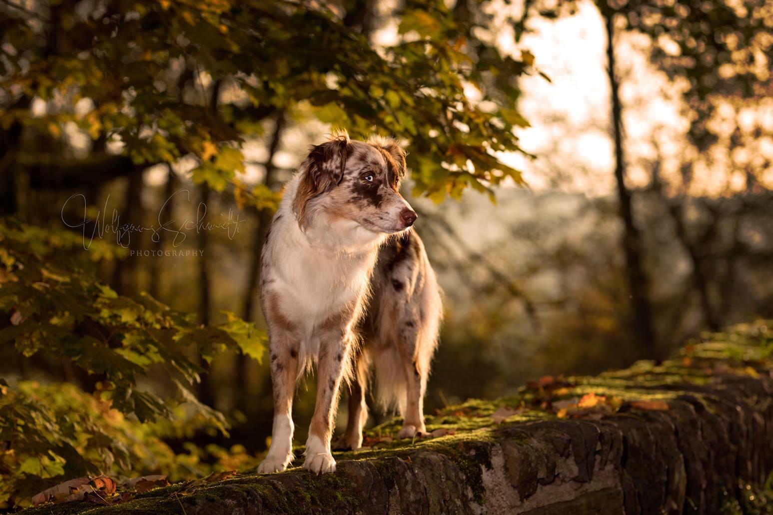 Ivy - Goldener Oktober Marienstatt
