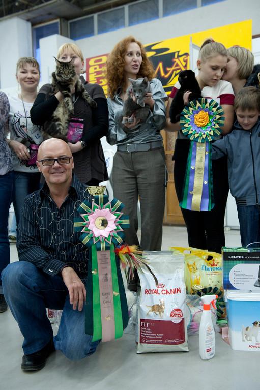 Радость Grey Silk. Лучшая короткошерстная легкая кошка 2011 год