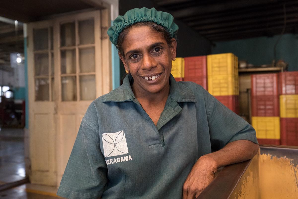 Schnappschuss einer Angestellten beim Besuch einer Teefabrik, Kandy