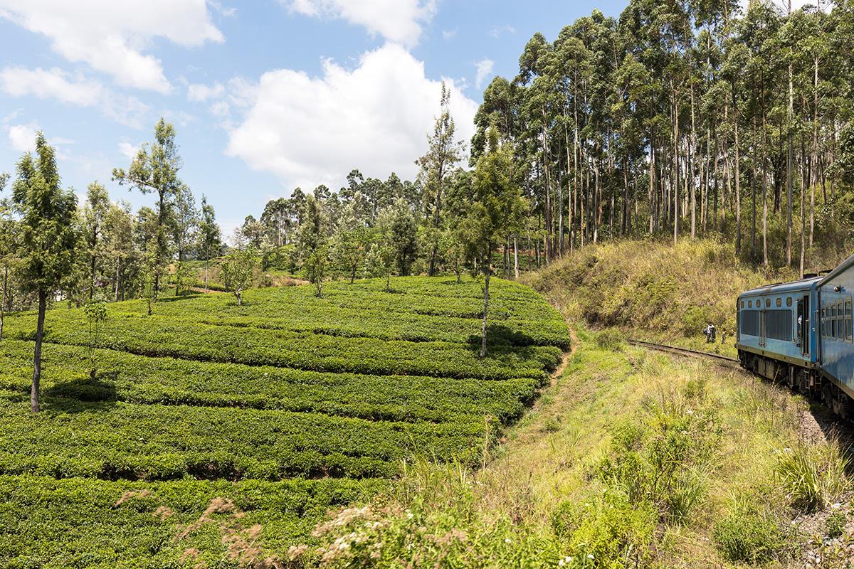 Zugfahrt durch's Hochland zwischen Kandy und Nuwara Eliya