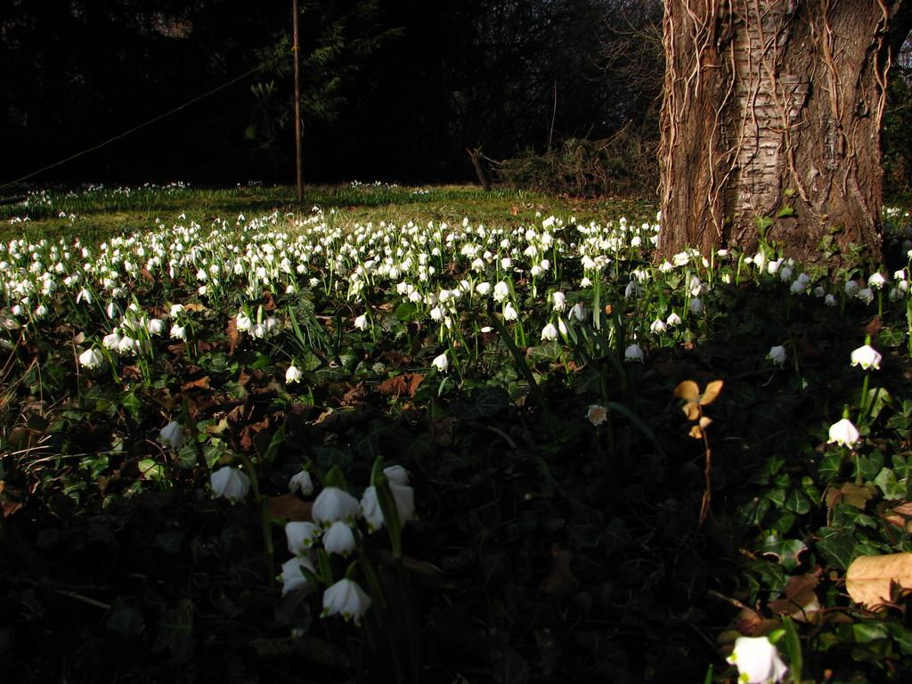 Frühlingsgruß 1