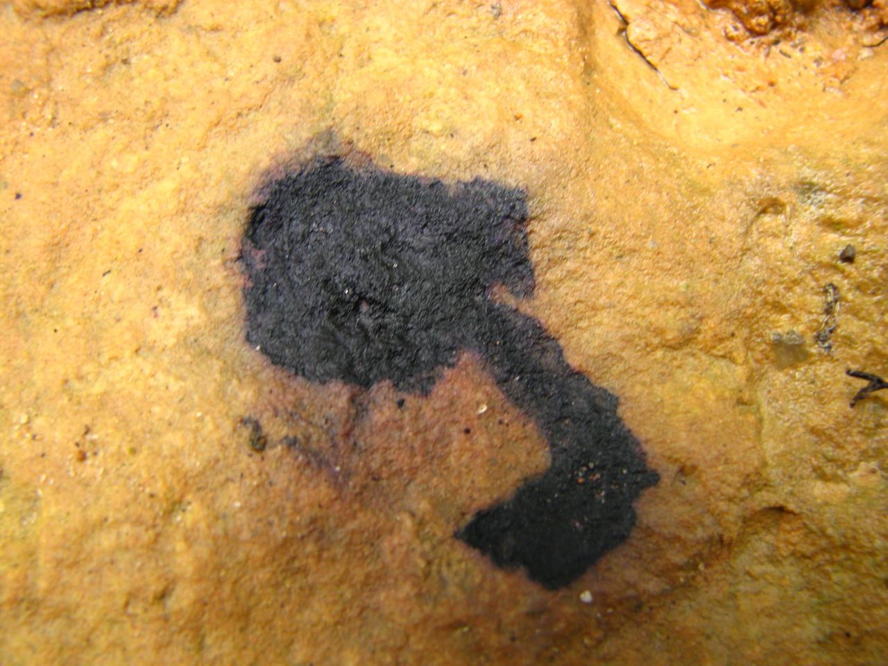 Blaubeere auf Sandstein