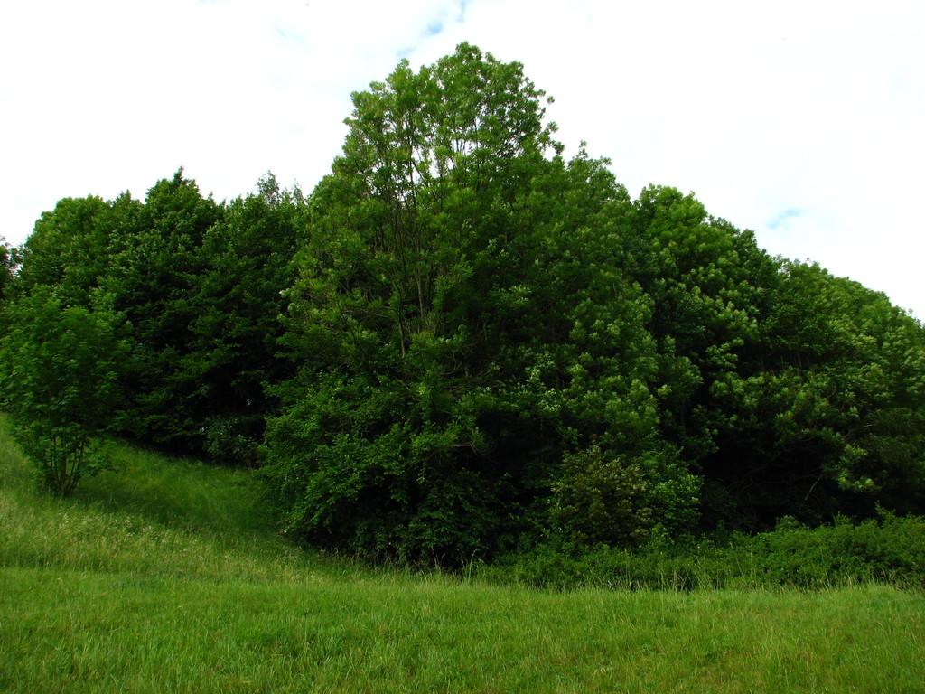 Ameisenwald
