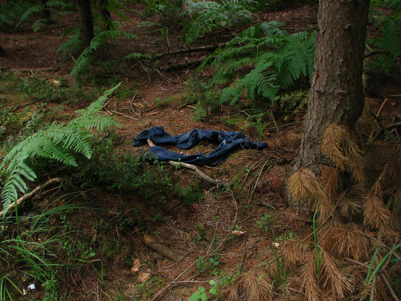 Hose im Wald