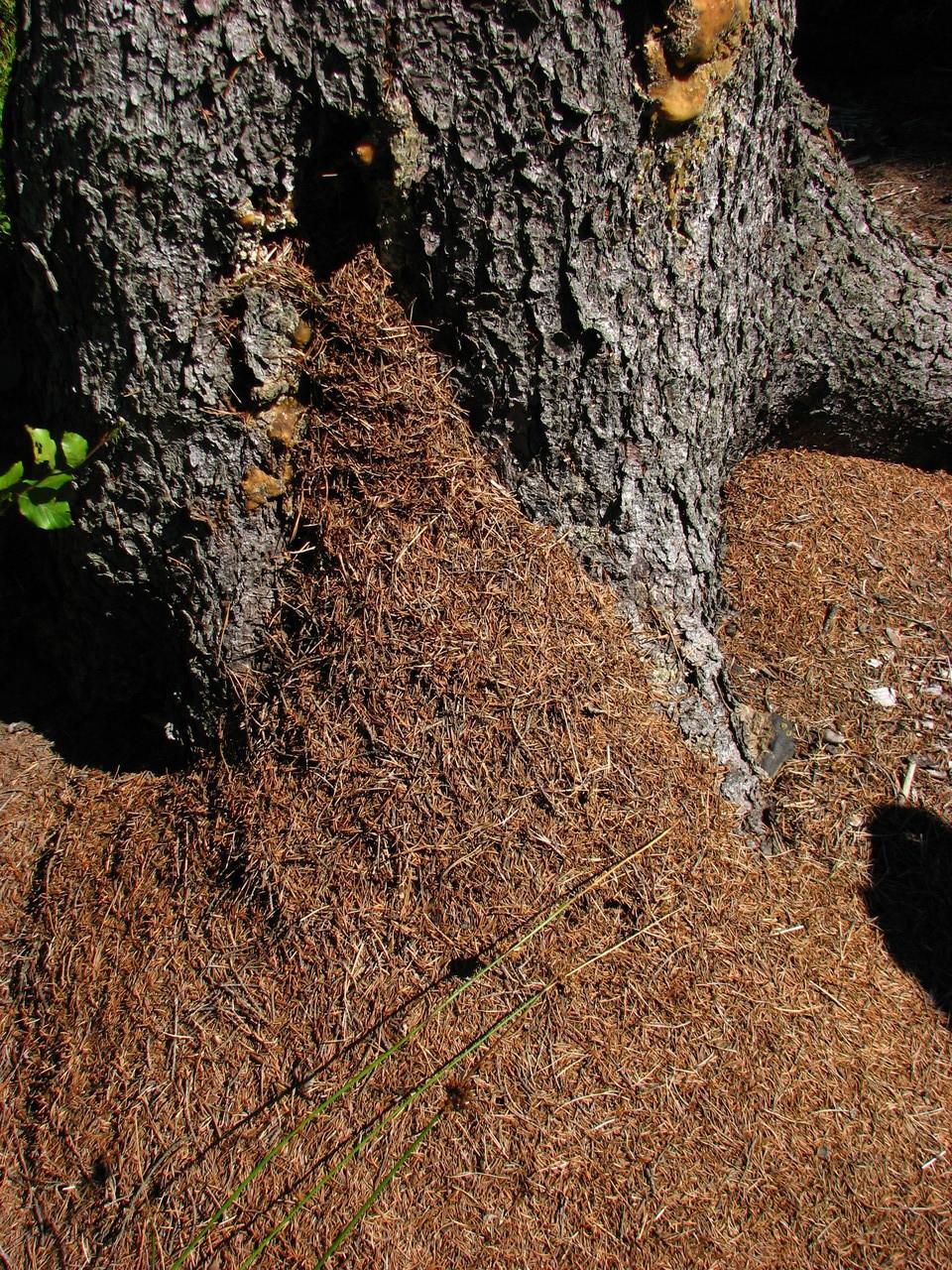 Ameisenzeichen