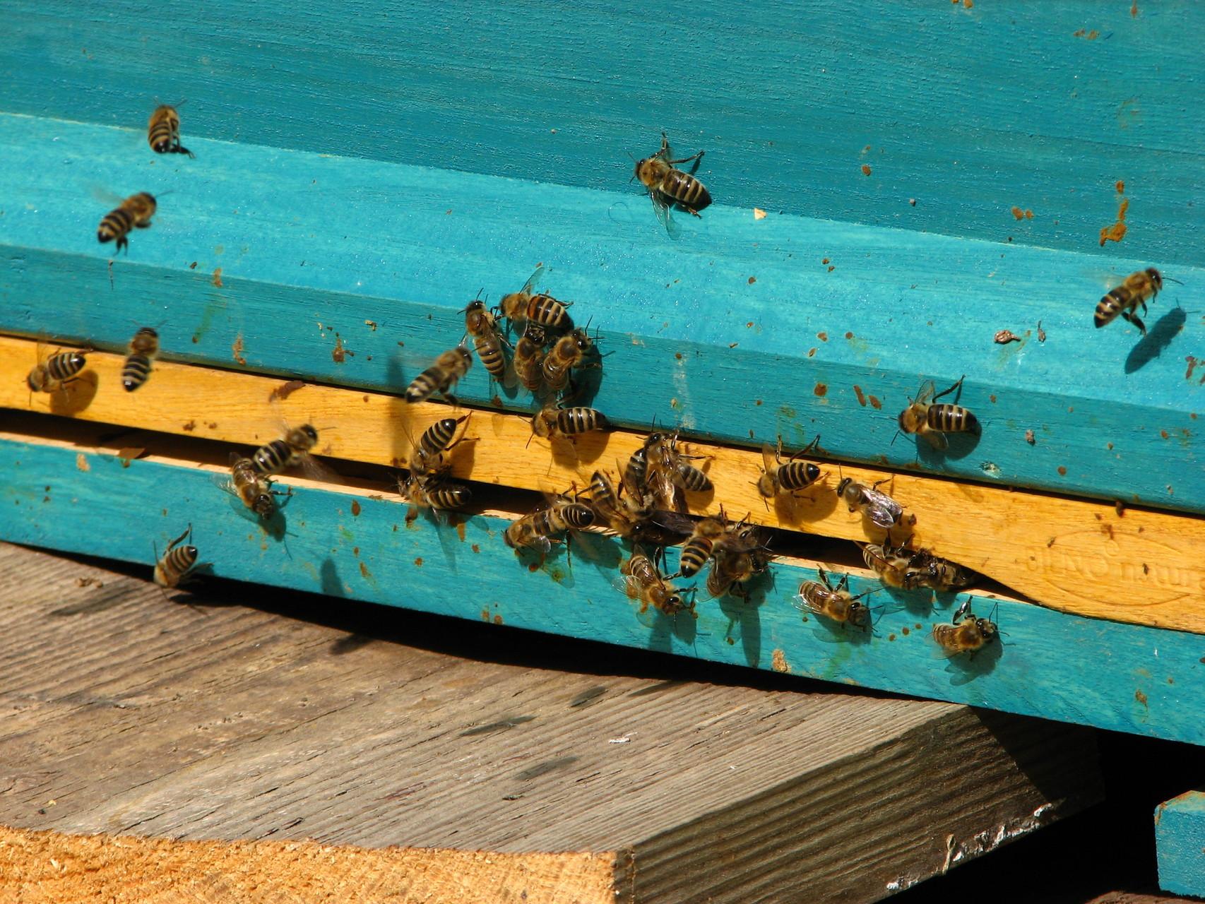 Bei Hermanns fliegen die Bienen