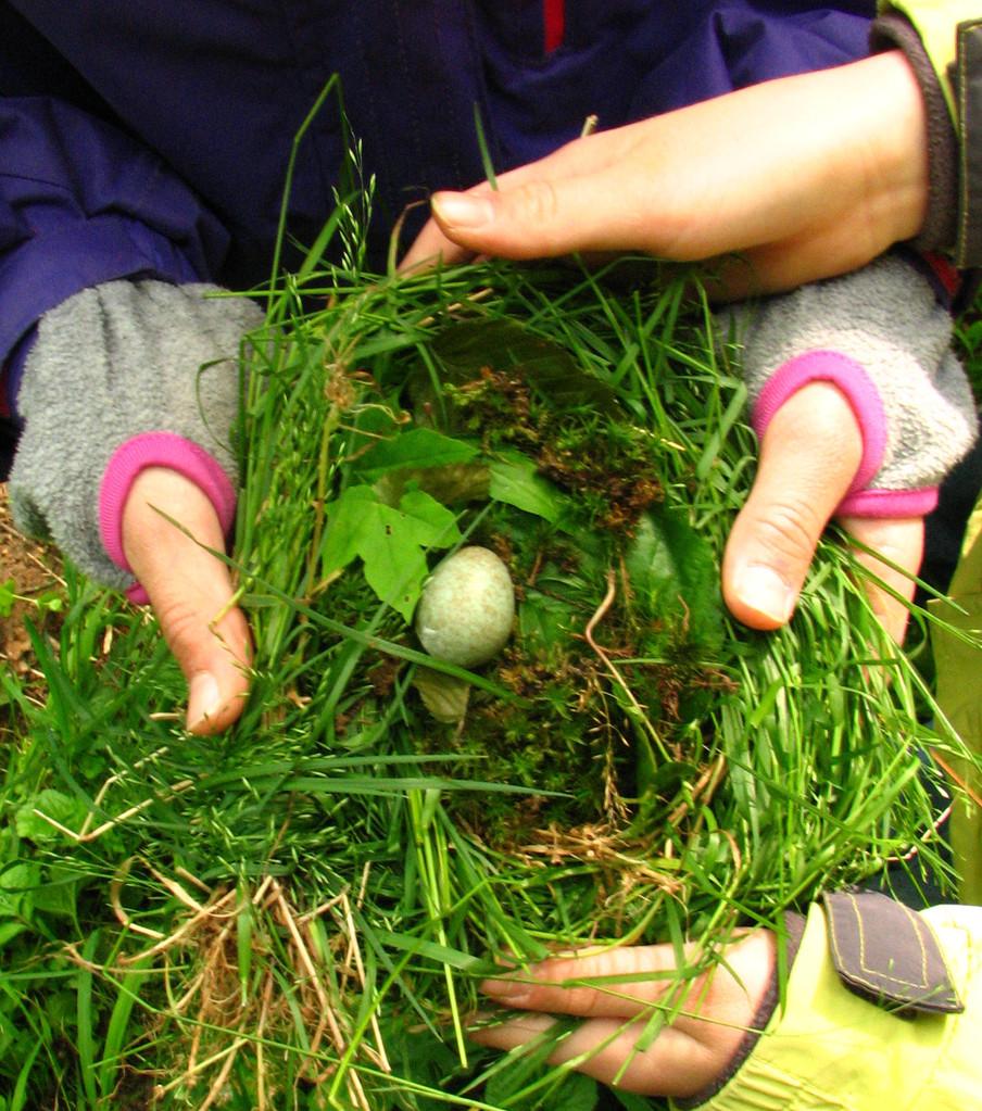 Nest gebaut für den Fund