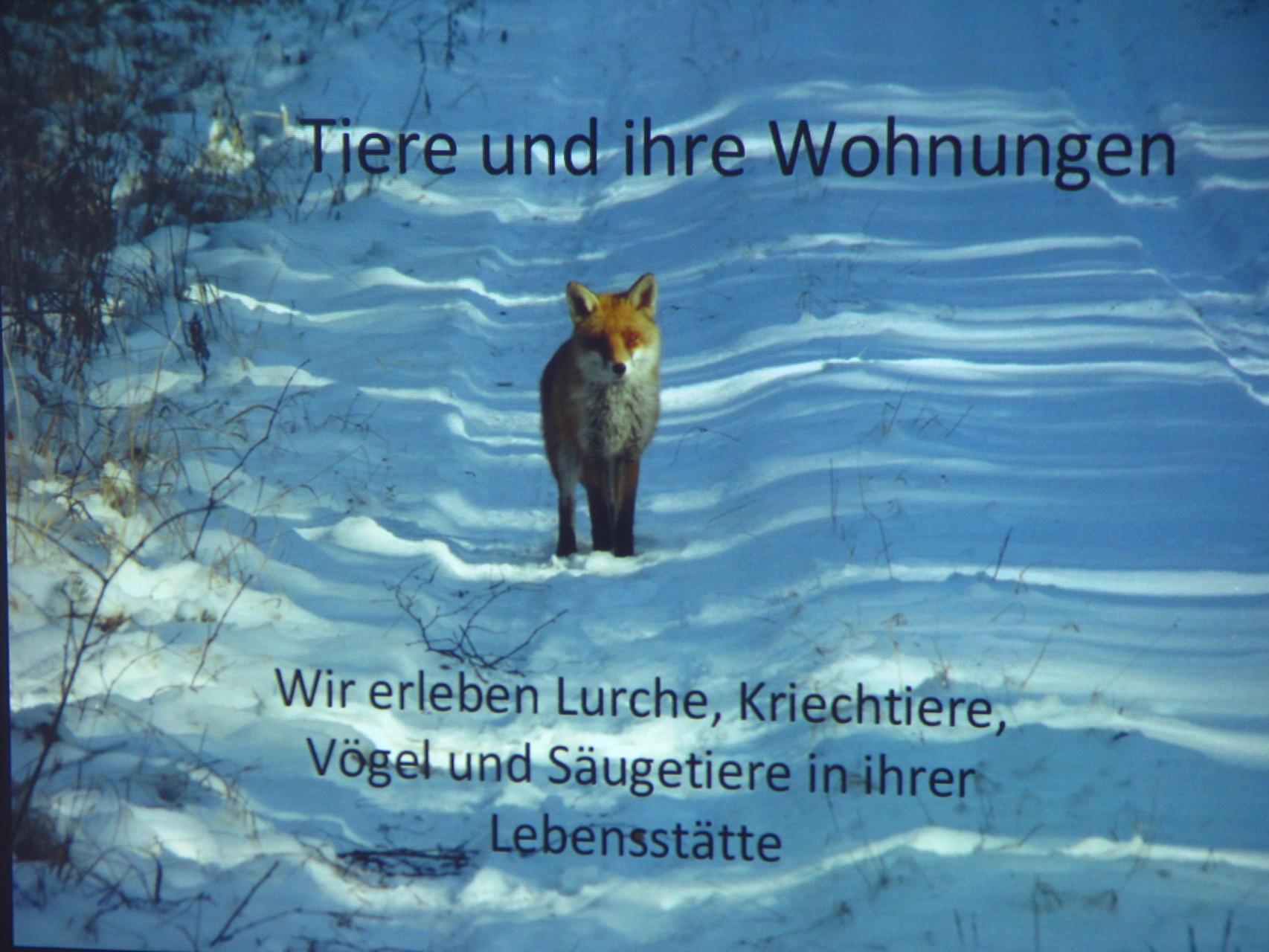 Multivisionsvortrag von Herrn Schrack -Auszug-