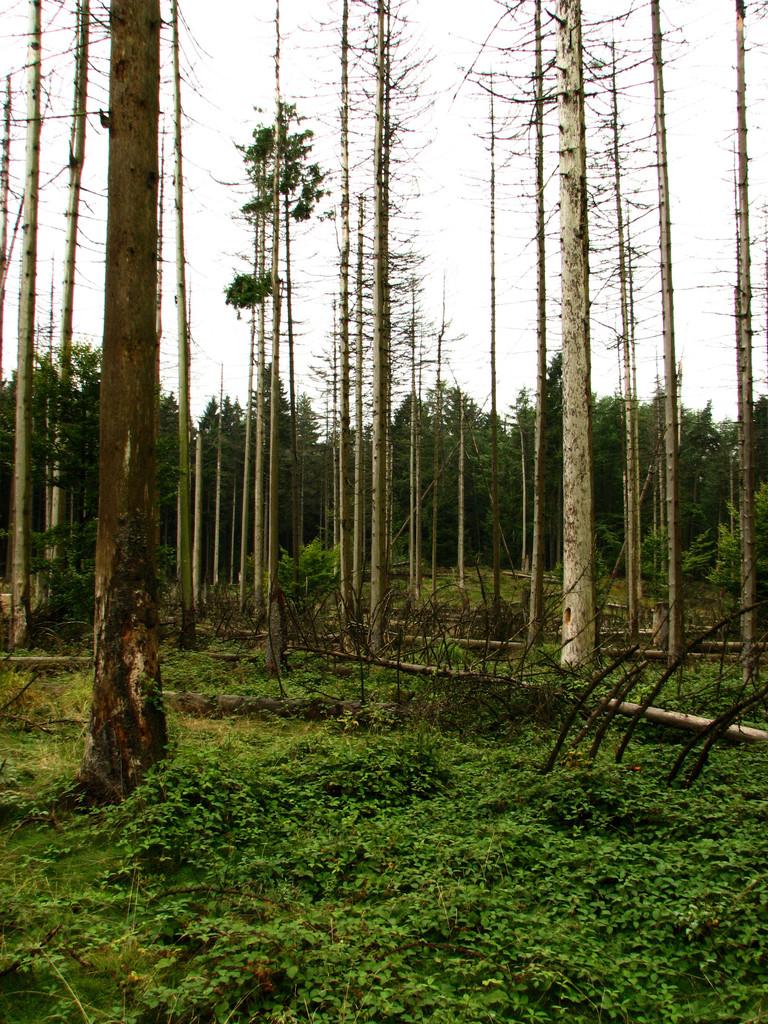 Der Borkenwald erholt sich