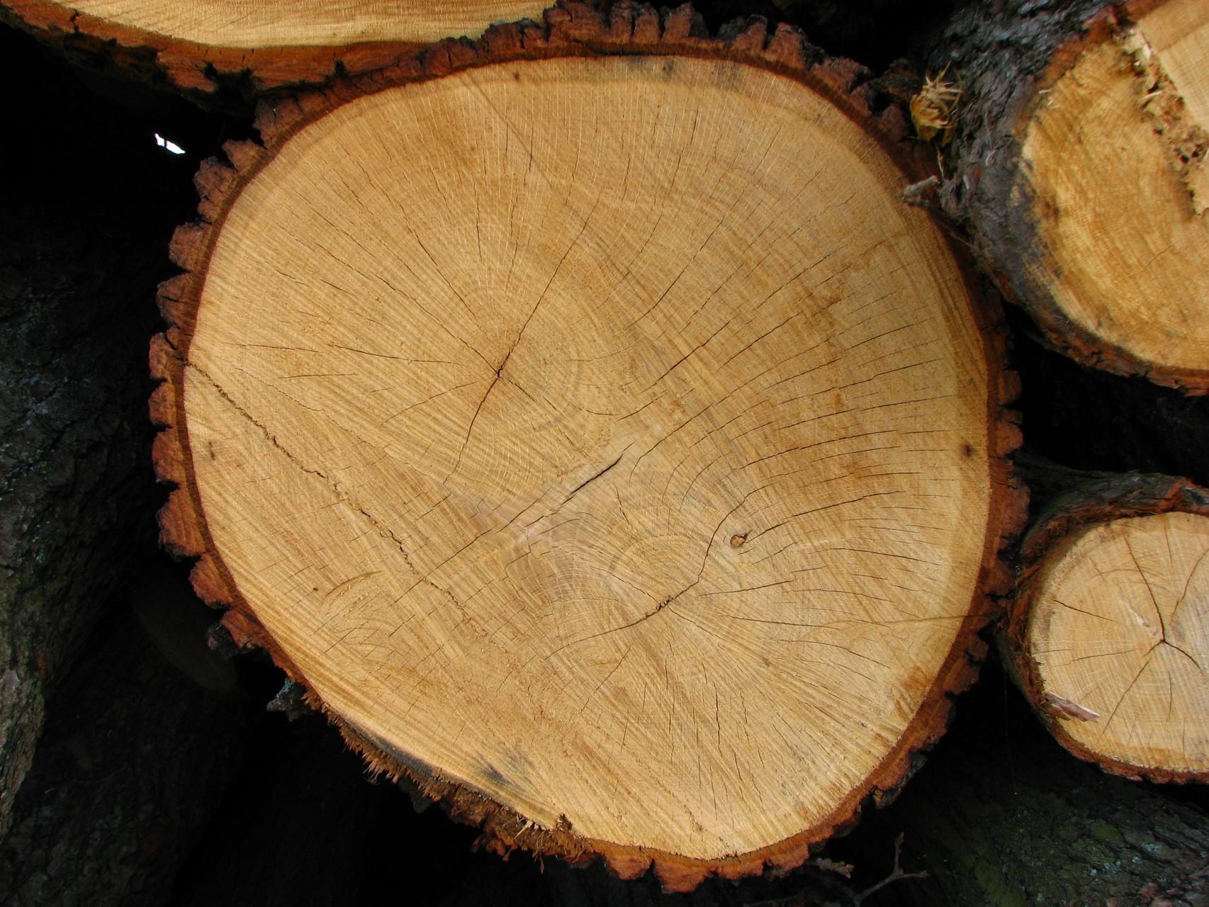 Bestes Holz - für wen?-
