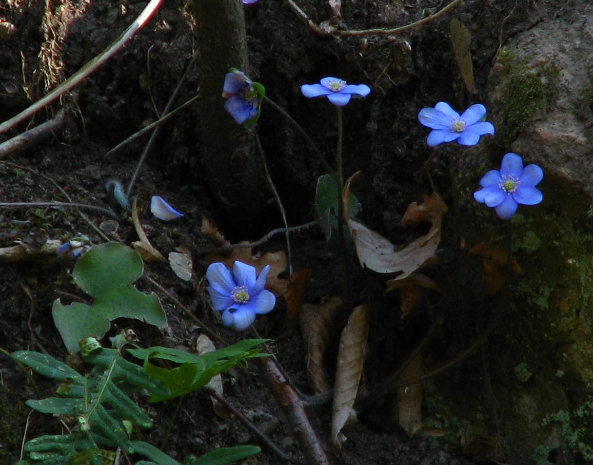Als Dankeschön gibt es unsere blaue Blume !