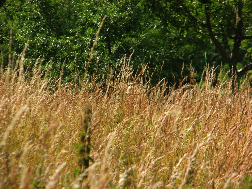 Verstecken im Gras 1