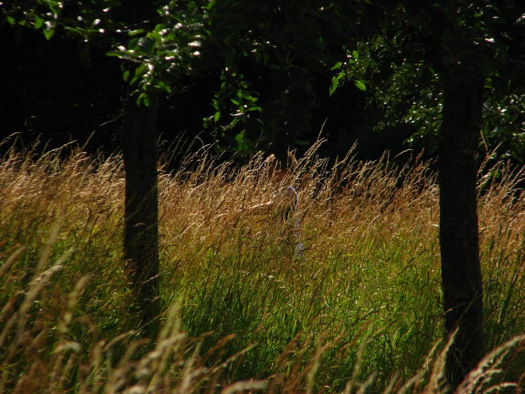 Verstecken im Gras 2