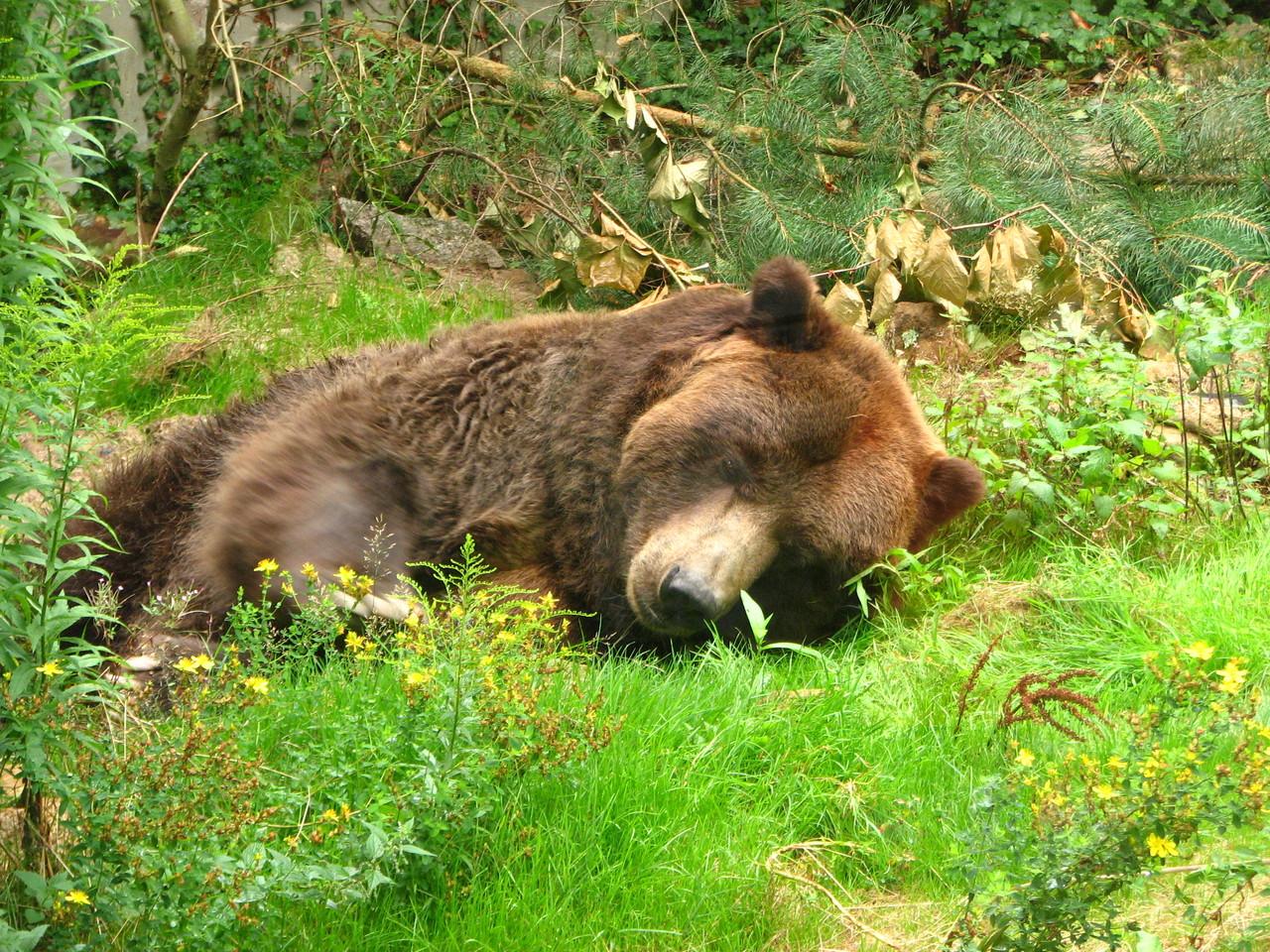 Lag der Bär voriges Jahr nicht auch schon da?