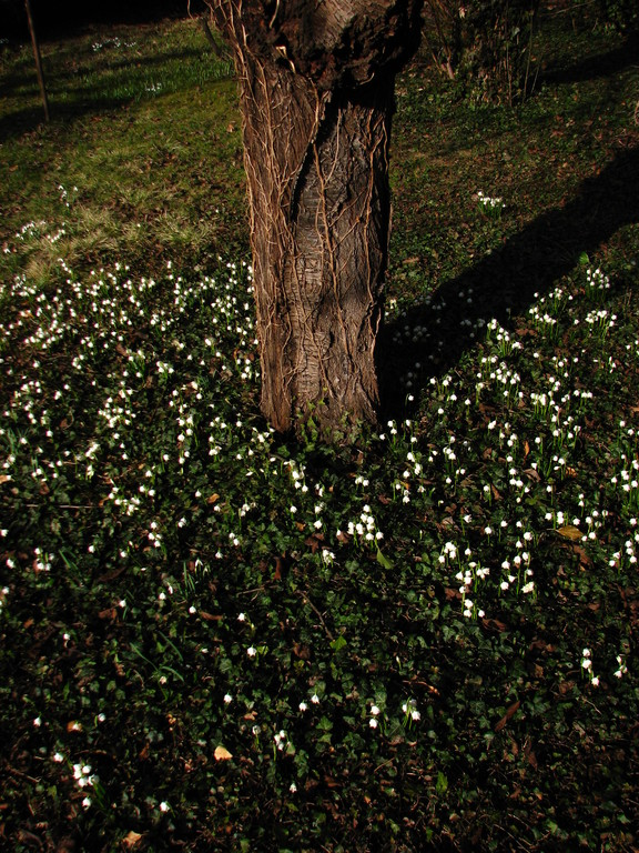 Frühlingsgruß 2