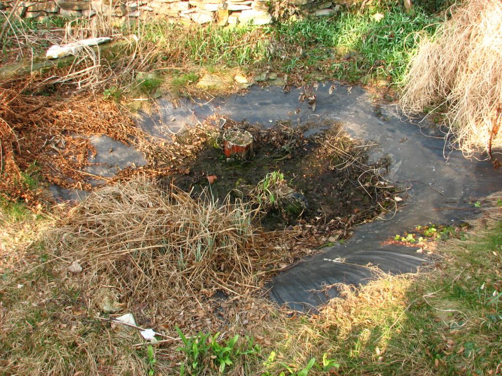 Der Teich vor der Reinigung.