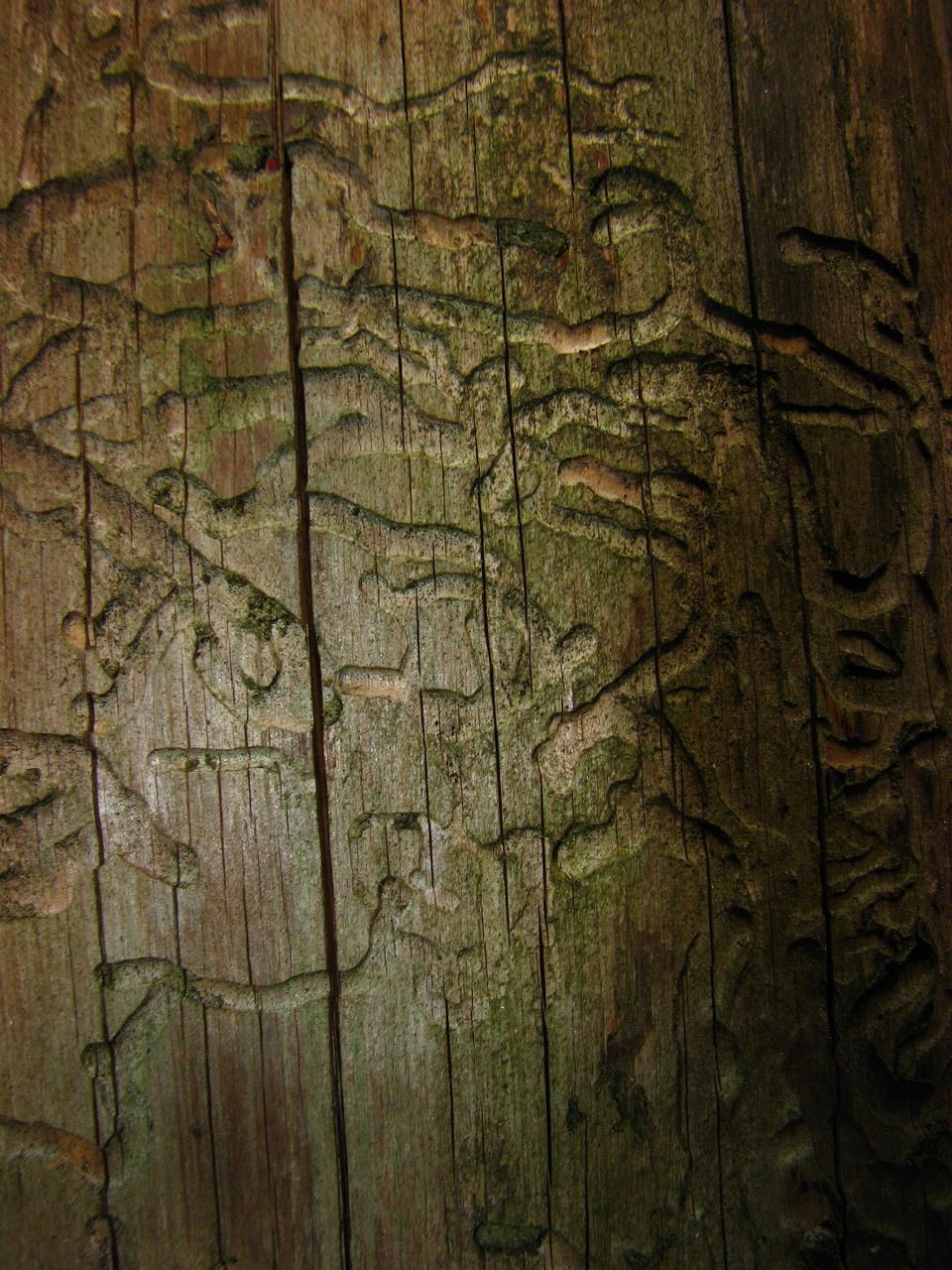 Rätselholz