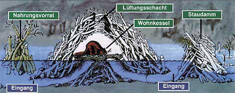 Grafik vom Nabu Sachsen Anhalt
