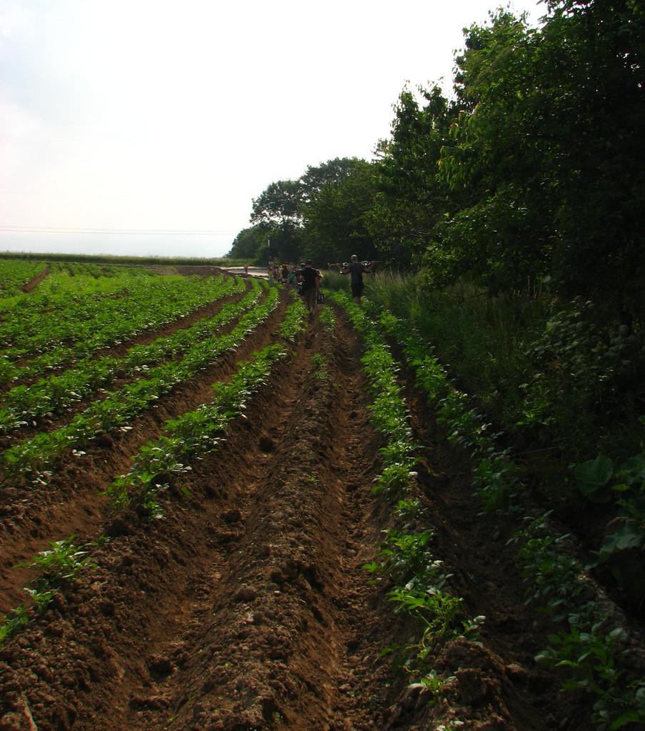 Durch die Kartoffelfurche zum Fußball und zur Ameisenwiese.