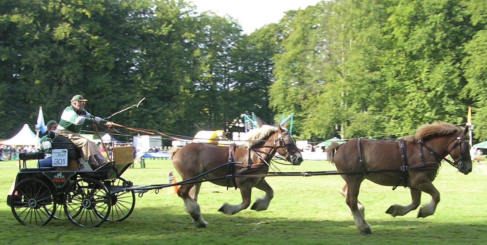 Training working horses Part 4 - Emmanuel de Meulanaer