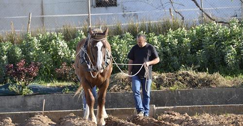 L'éducation du jeune cheval de travail - The education of the young working horse