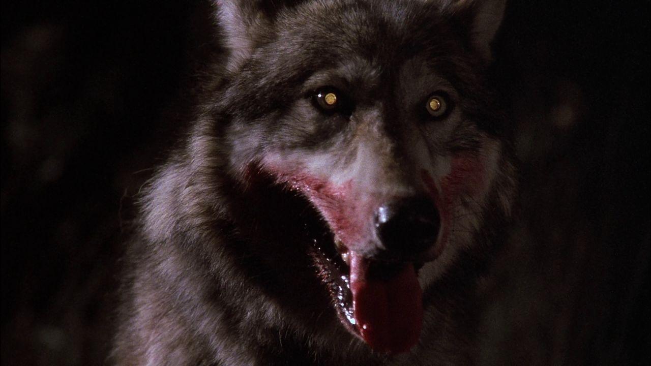 La Compagnie Des Loups - 1984