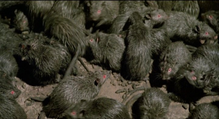Les Rats De Manhattan (1984)