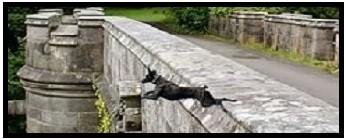 LE PONT D'OVERTOUN OU THE DOG SUICIDE BRIDGE / Mythes & légendes urbaines