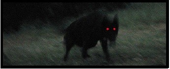 BLACK SHUCK - LE SPECTRE CANIN / Mythes & légendes urbaines