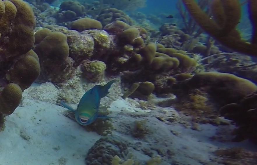 Deze parrotfish lacht al zijn tandjes bloot!